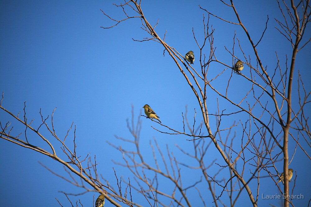 Yellow Birdies  by Laurie Search
