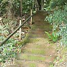 Bush Stairway by Bami