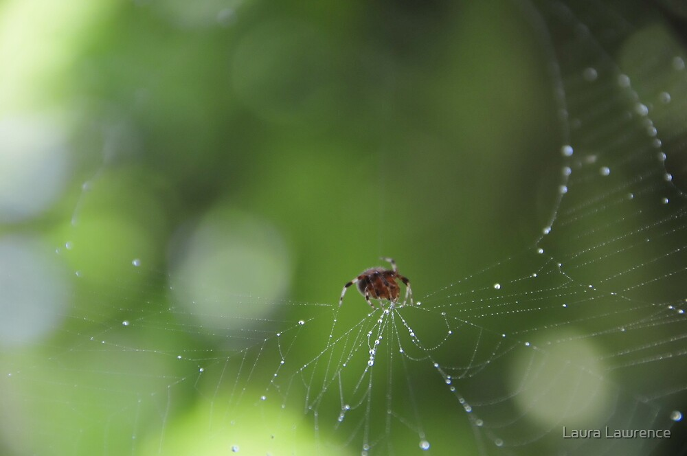 A Spider's Journey by Laura Lawrence