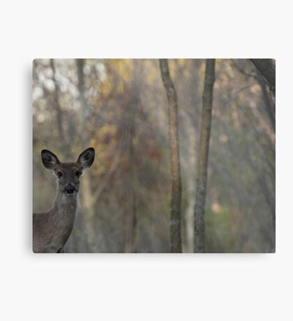 Deer is proud of his forest! Metal Print