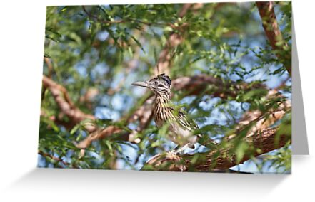 Greater Roadrunner Perched in Tree by Susan Gary