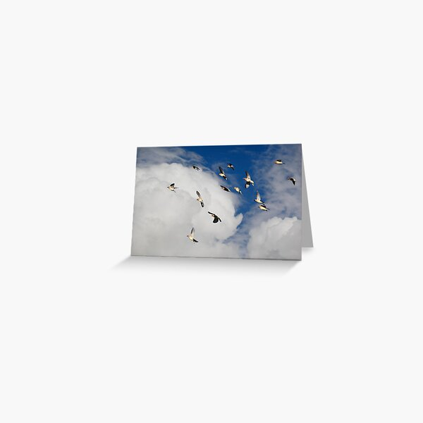 Cedar Waxwings in Flight Greeting Card