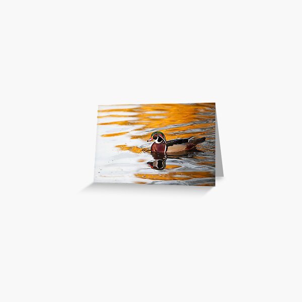 Wood Duck on Golden Pond Greeting Card