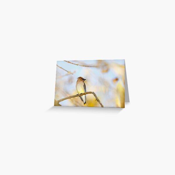 Cedar Waxwing Closeup in Tree Greeting Card