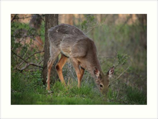 Wild Deer Eats Dinner by Thomas Murphy