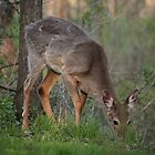 Wild Deer Eats Dinner by Thomas Murphy