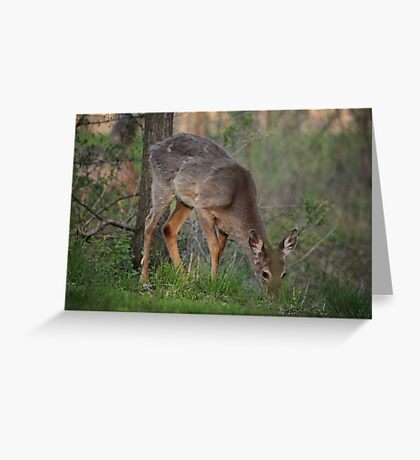 Wild Deer Eats Dinner Greeting Card