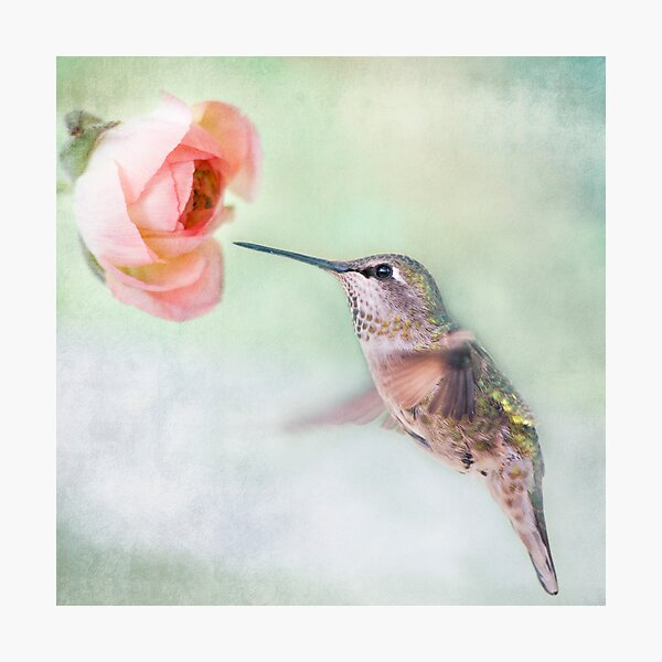Hummingbird on Green Photographic Print