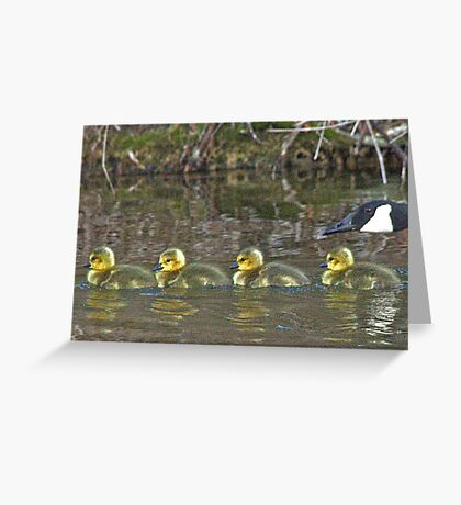 Goose with Goslings Greeting Card