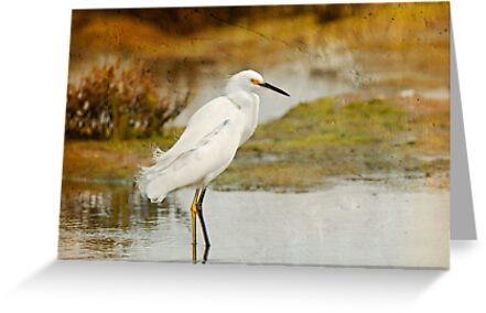 Snowy Egret, Textured by Susan Gary