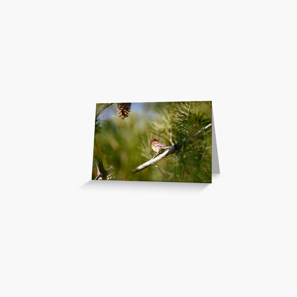 House Finch on Green Greeting Card