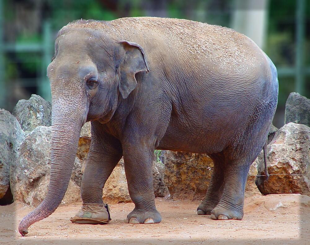 Tricia the Elephant by Darren Speedie