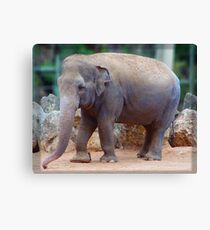 Tricia the Elephant Canvas Print