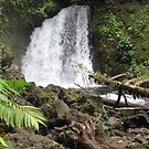 Costa Rican Waterfall by P.M. Franzen