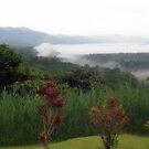 Misty Canopy by P.M. Franzen