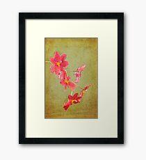 Verdant Orchid Framed Print
