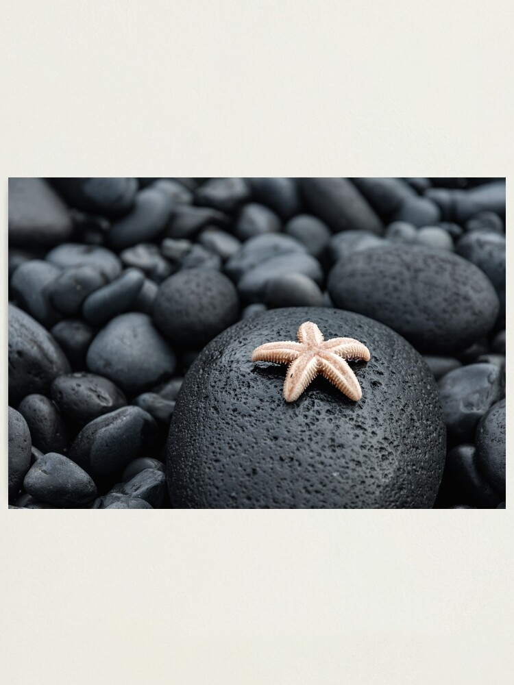 Alternate view of Cute starfish on lava rocks Photographic Print