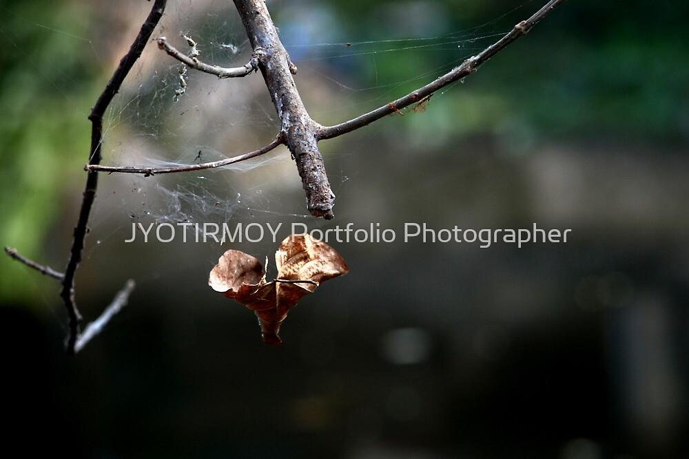 Winter ! by JYOTIRMOY Portfolio Photographer