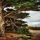 Trees By The Sea by CarolM