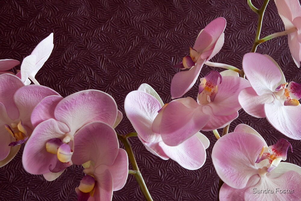 Pink Orchids On Burgundy Background by Sandra Foster