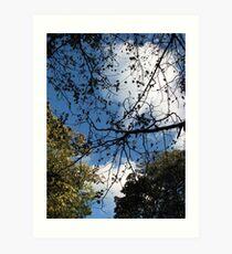 Autumn Sky and Canopy  Art Print