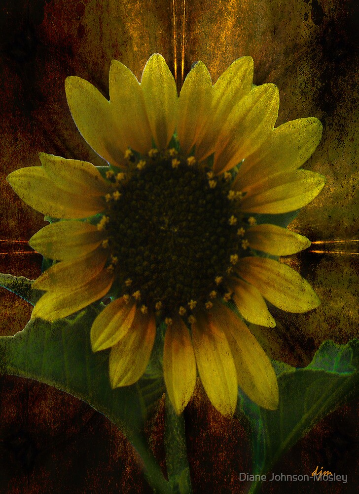 Summer Face by Diane Johnson-Mosley