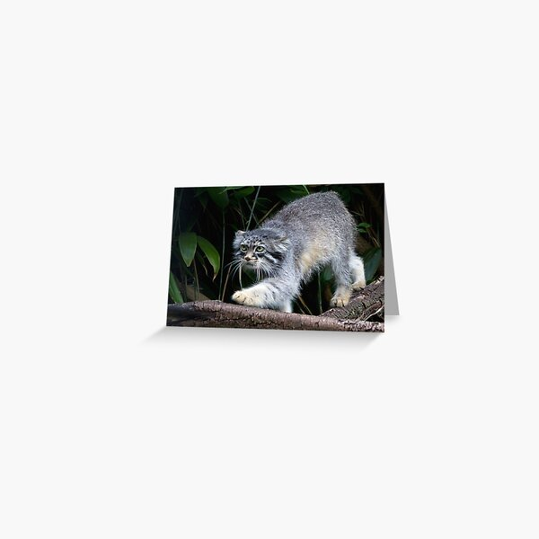 Pallas cat on Branch Greeting Card