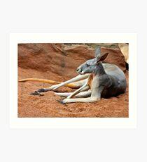 Relaxing Kangaroo Art Print