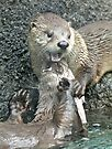 The joy of otter by Anthony Brewer