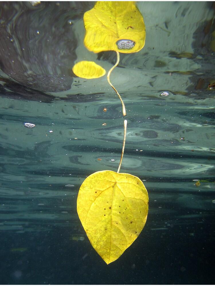 Leaf over Reef II by neoniphon