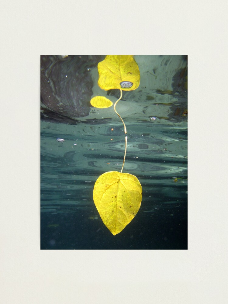 Alternate view of Leaf over Reef II Photographic Print