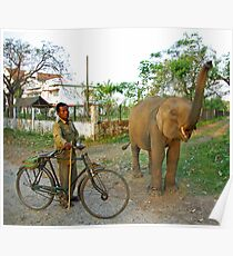 Baby elephant, Manas National Park, India. Poster