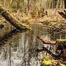 Grand Ridge Marsh by Dale Lockwood