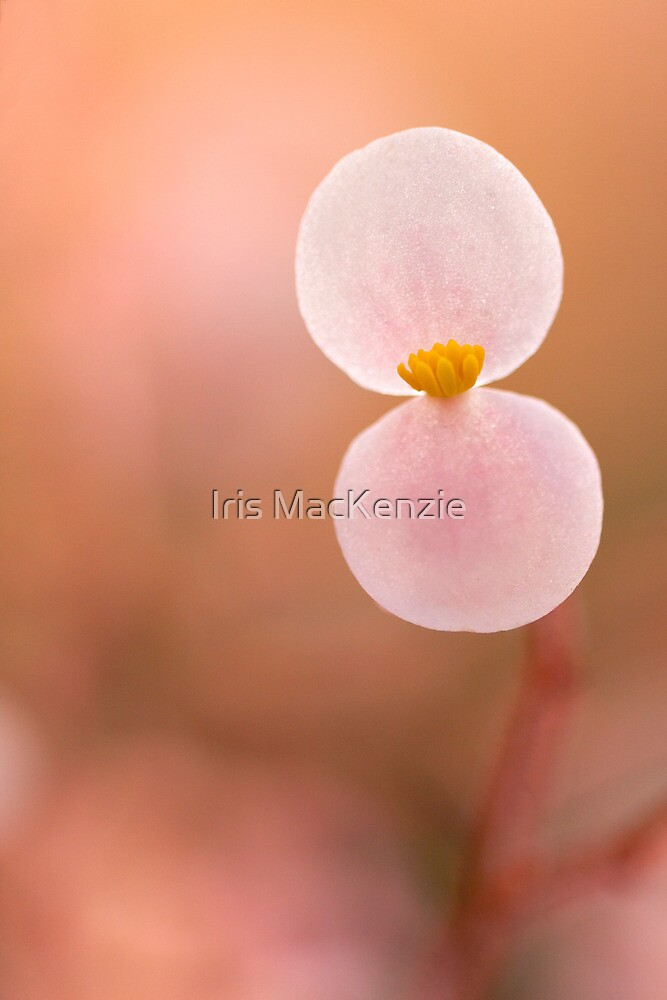 happy summer/winter solstice!!! by Iris MacKenzie