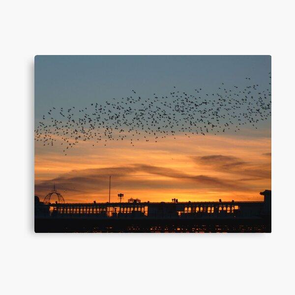 Starlings at Sunset Canvas Print
