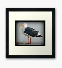 The Sea Gull By The Bay Framed Print