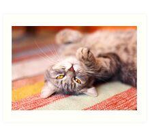 Kitty Cat Nap Art Print