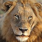 Majigilane male (The Sabi Sands will soon belong to our coalition) by Anthony Goldman