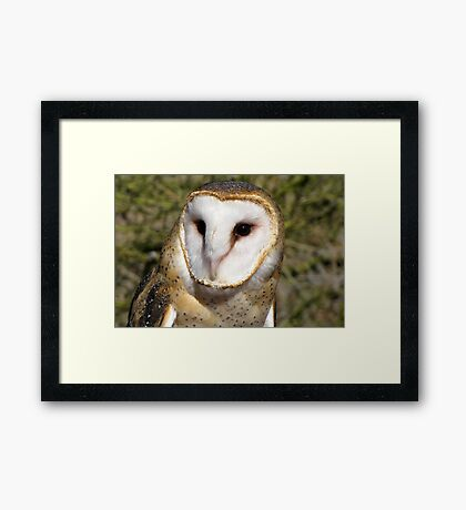 Barn Owl ~ Portrait Framed Print