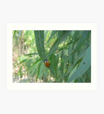 Convergent Lady Beetle Art Print