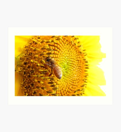 Pollination Series ~ 6 Art Print