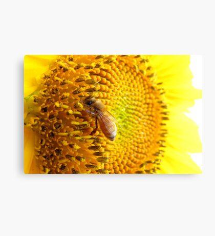 Pollination Series ~ 6 Canvas Print
