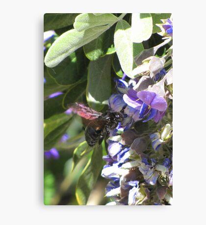 Pollination Series ~ 2 Canvas Print