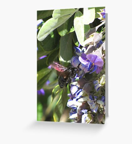 Pollination Series ~ 2 Greeting Card