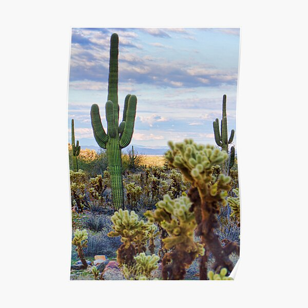 Arizona Cactus Garden. Poster