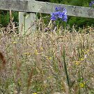 Fence by Digby