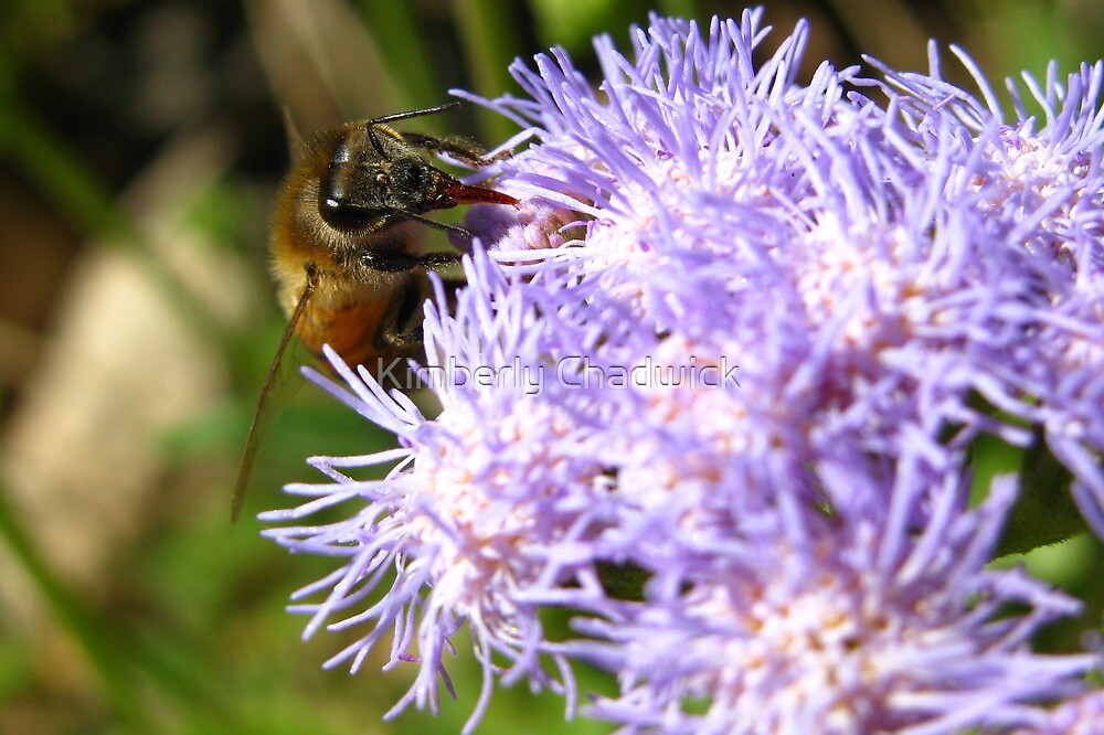 I Bee Collecting More by Kimberly Chadwick