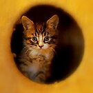 She's got the hole world in her paws by Alan Mattison