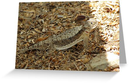 Horned Lizard ~ Desert by Kimberly Chadwick