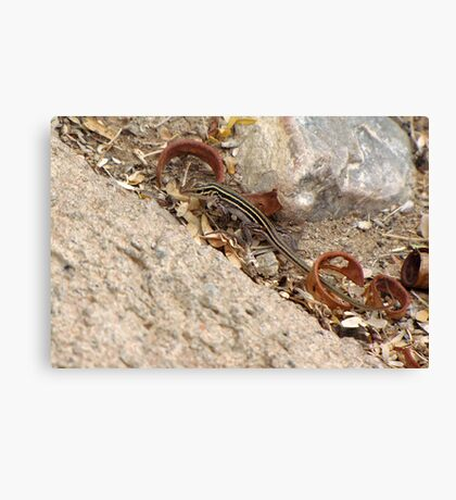 Gila/Sonoran Spotted Whiptail (Juvenile) Canvas Print
